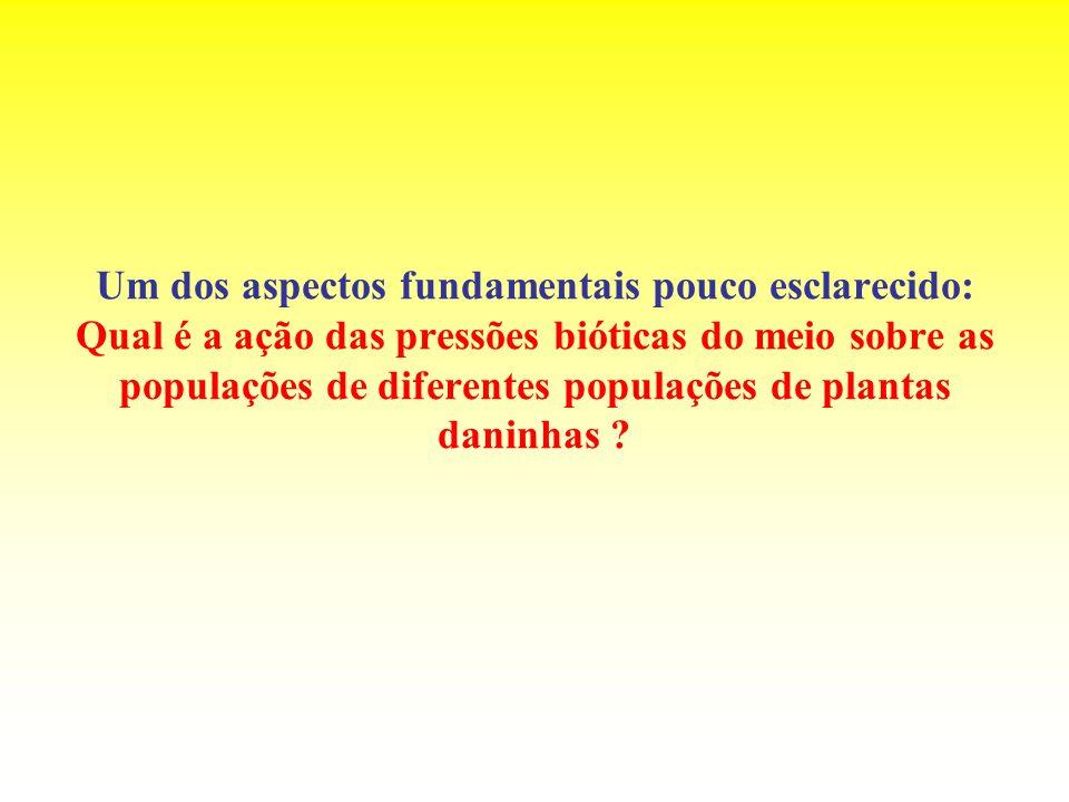 Um dos aspectos fundamentais pouco esclarecido: Qual é a ação das pressões bióticas do meio sobre as populações de diferentes populações de plantas daninhas