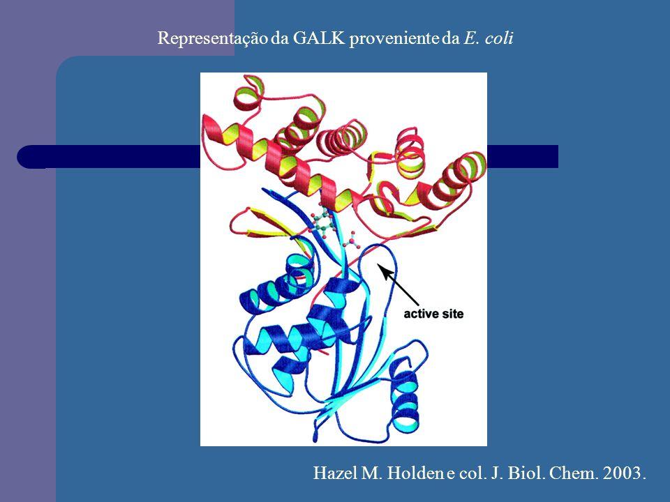 Representação da GALK proveniente da E. coli