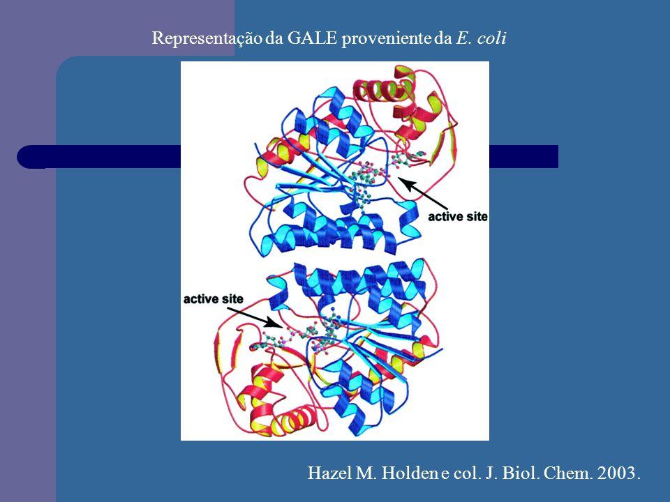 Representação da GALE proveniente da E. coli