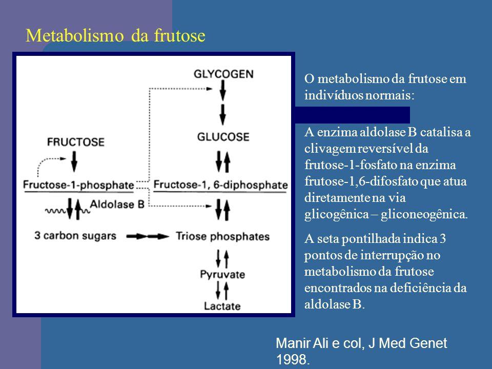 Metabolismo da frutose