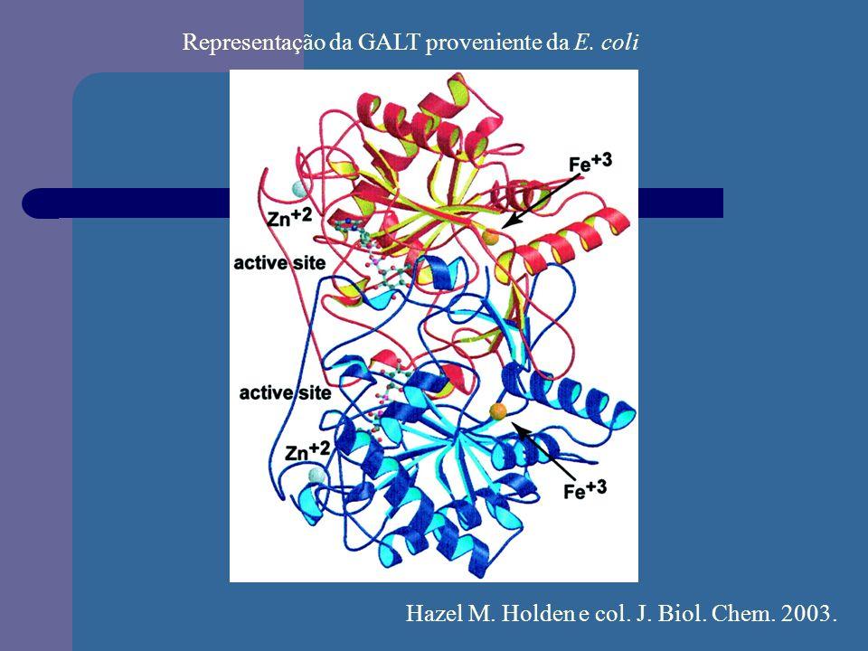 Representação da GALT proveniente da E. coli