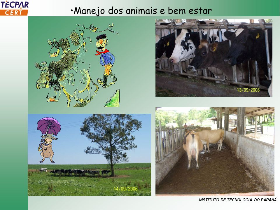 Manejo dos animais e bem estar