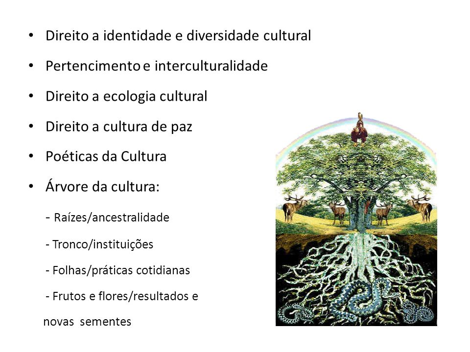 Direito a identidade e diversidade cultural