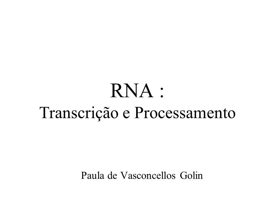 RNA : Transcrição e Processamento