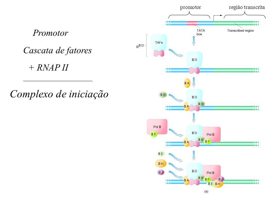 Complexo de iniciação Promotor Cascata de fatores + RNAP II promotor