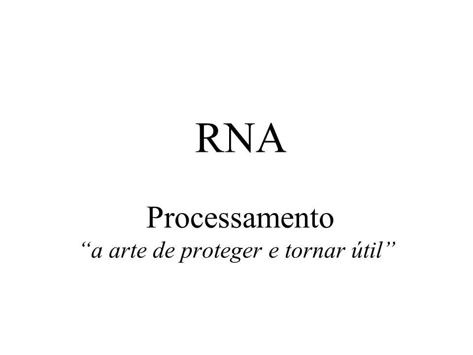 RNA Processamento a arte de proteger e tornar útil
