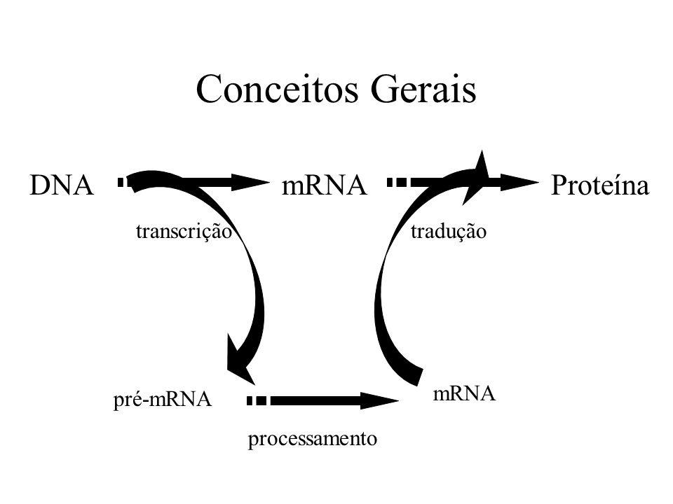 Conceitos Gerais DNA mRNA Proteína transcrição tradução mRNA pré-mRNA