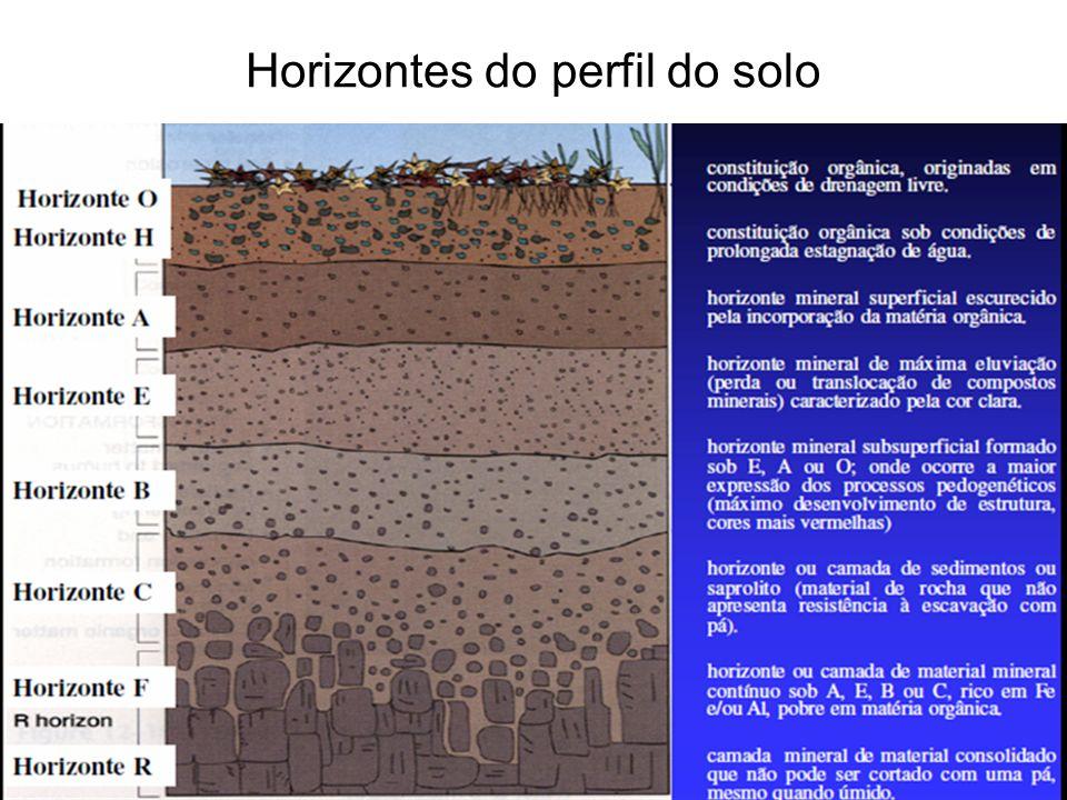 Horizontes do perfil do solo