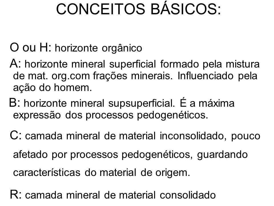 O ou H: horizonte orgânico