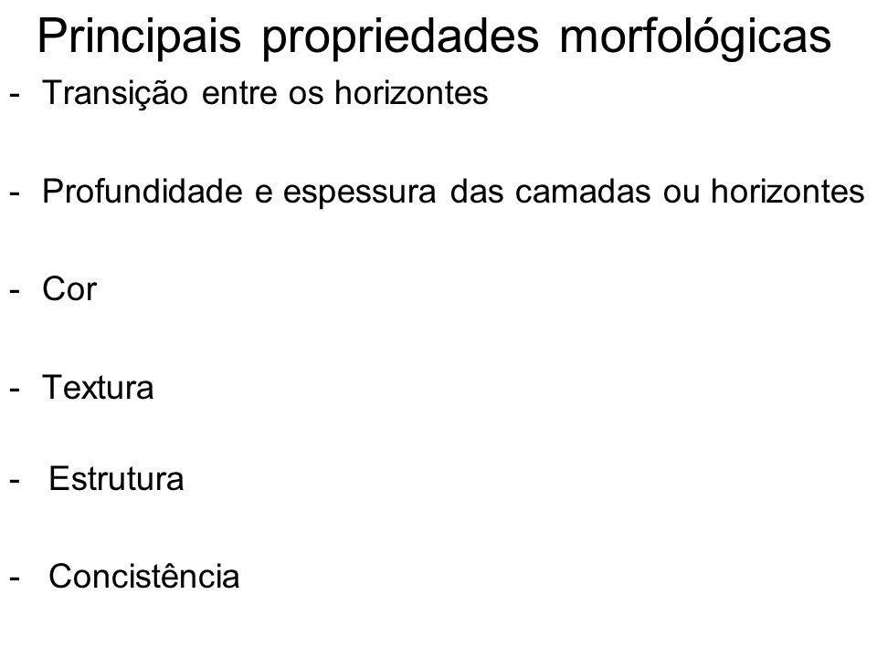 Principais propriedades morfológicas