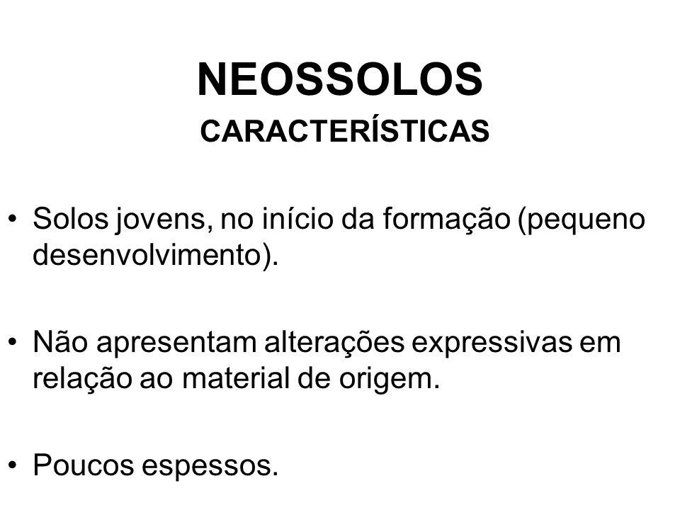 NEOSSOLOS CARACTERÍSTICAS