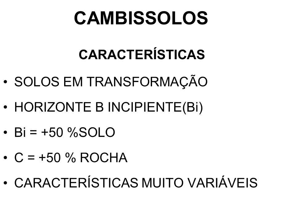 CAMBISSOLOS CARACTERÍSTICAS SOLOS EM TRANSFORMAÇÃO