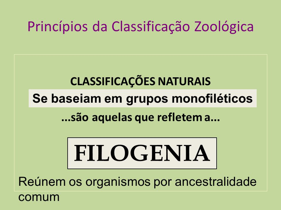Princípios da Classificação Zoológica