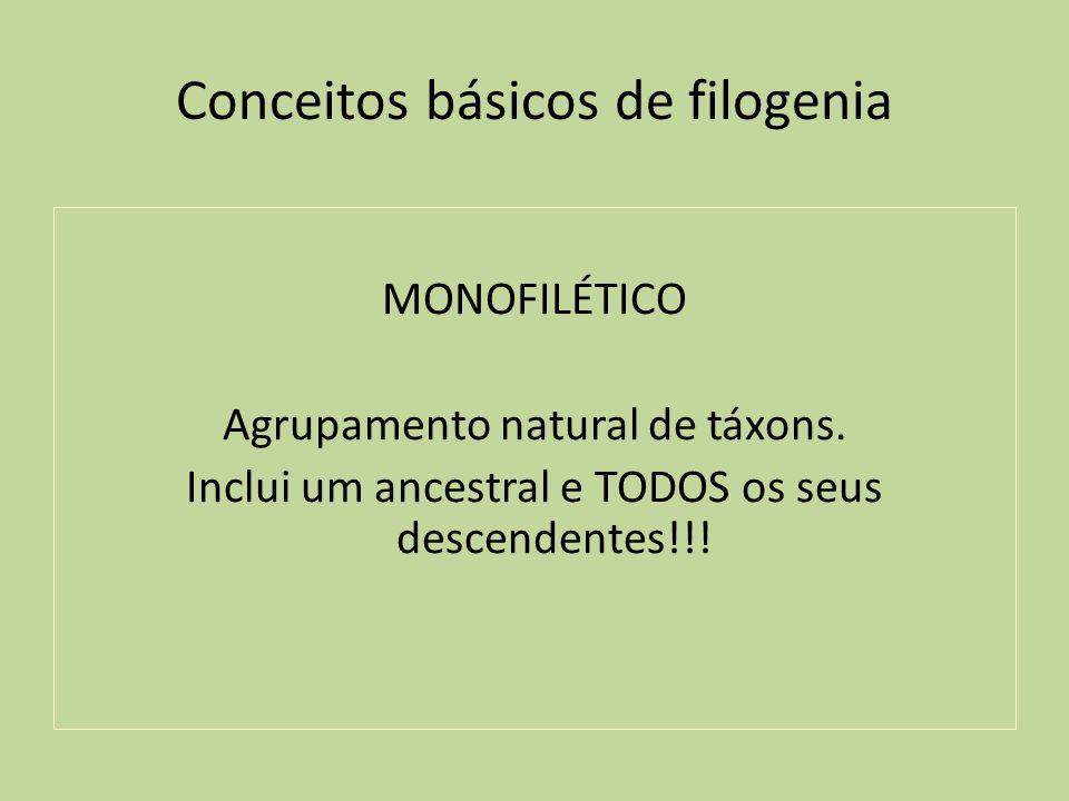 Conceitos básicos de filogenia