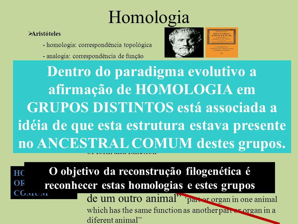 Homologia Aristóteles. - homologia: correspondência topológica. - analogia: correspondência de função.