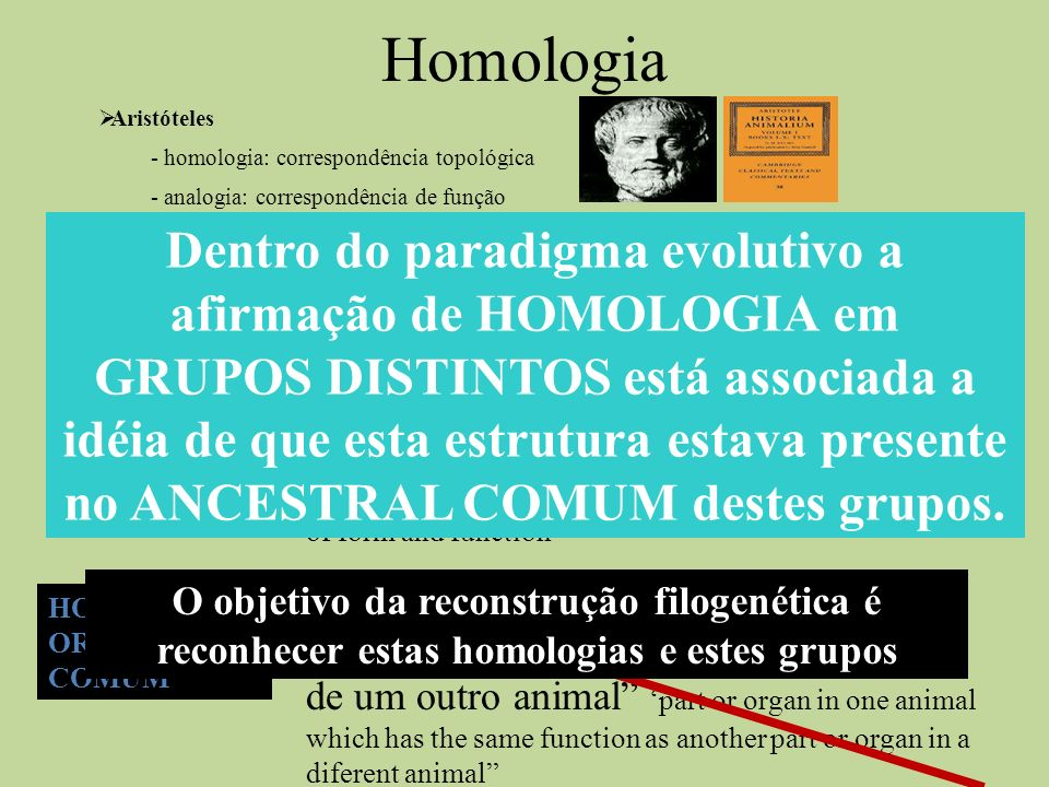 HomologiaAristóteles. - homologia: correspondência topológica. - analogia: correspondência de função.