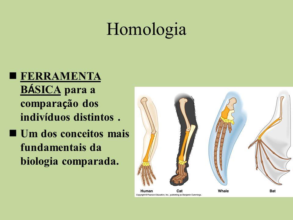 Homologia FERRAMENTA BÁSICA para a comparação dos indivíduos distintos .