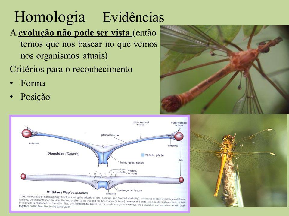 Homologia Evidências A evolução não pode ser vista (então temos que nos basear no que vemos nos organismos atuais)