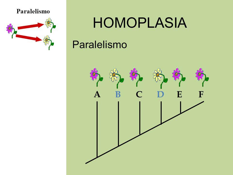Paralelismo HOMOPLASIA Paralelismo A B C D E F