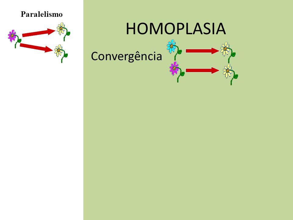 Paralelismo HOMOPLASIA Convergência