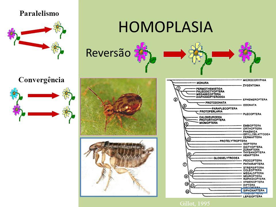 Paralelismo HOMOPLASIA Reversão Convergência Gillot, 1995
