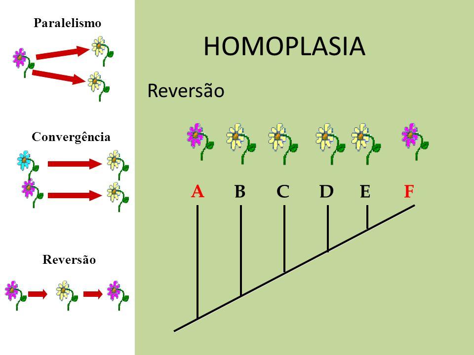 Paralelismo HOMOPLASIA Reversão Convergência A B C D E F Reversão
