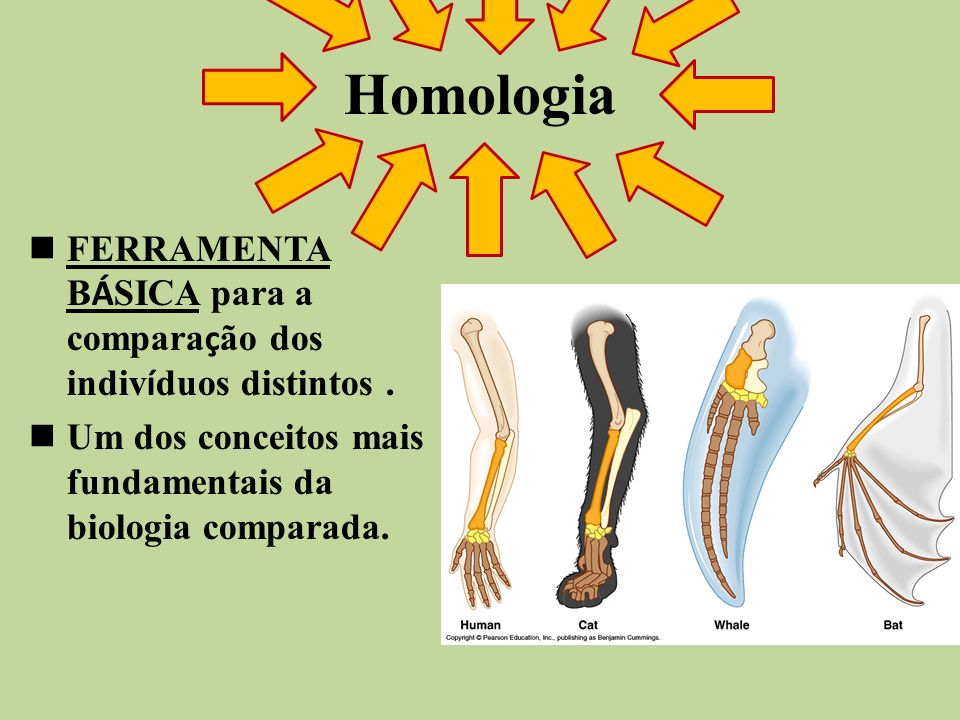 HomologiaFERRAMENTA BÁSICA para a comparação dos indivíduos distintos .
