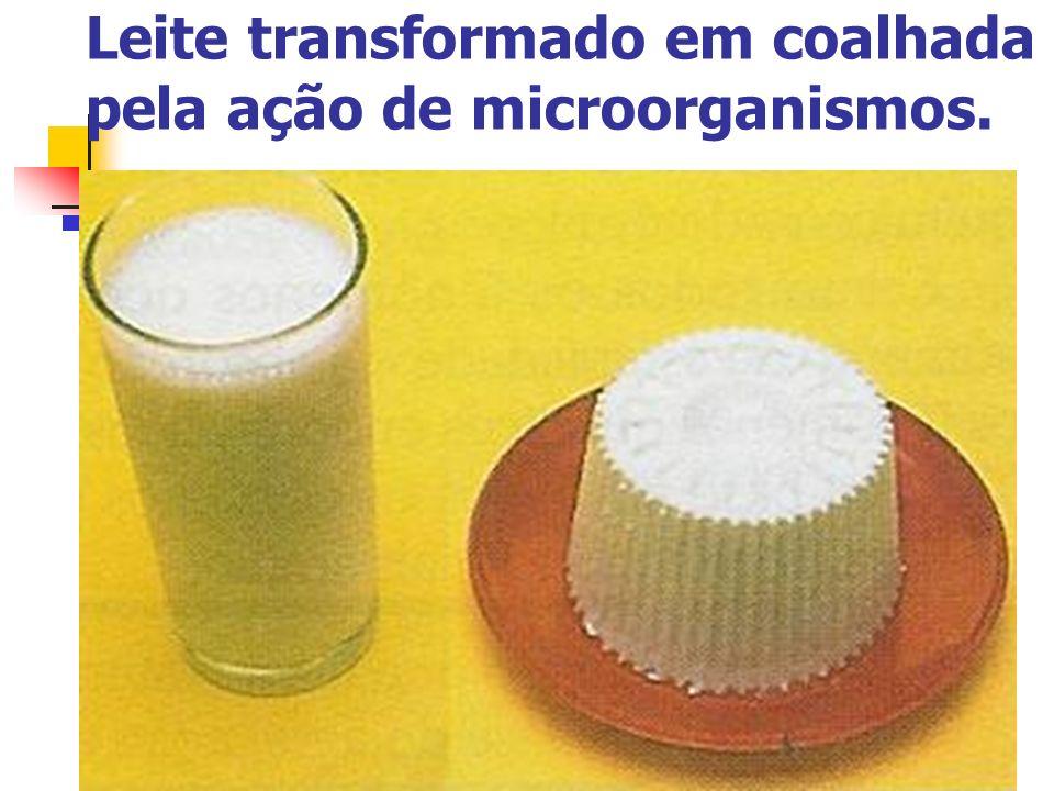 Leite transformado em coalhada pela ação de microorganismos.