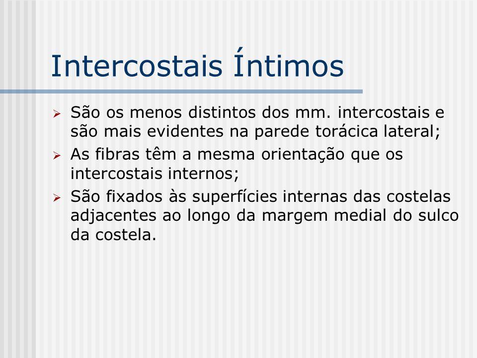 Intercostais Íntimos São os menos distintos dos mm. intercostais e são mais evidentes na parede torácica lateral;