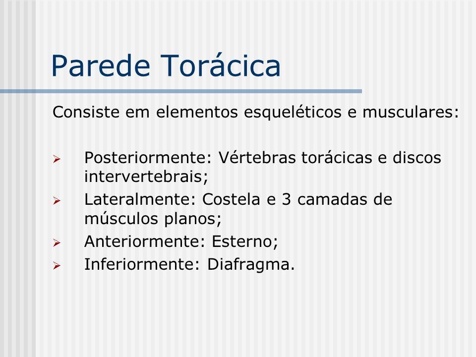 Parede Torácica Consiste em elementos esqueléticos e musculares: