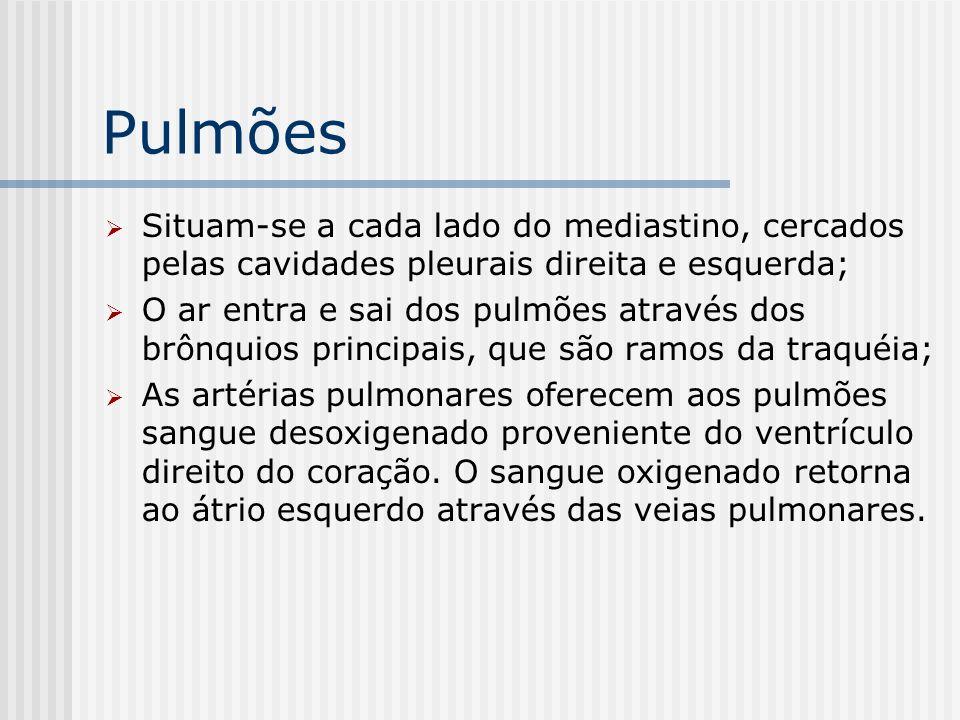 Pulmões Situam-se a cada lado do mediastino, cercados pelas cavidades pleurais direita e esquerda;