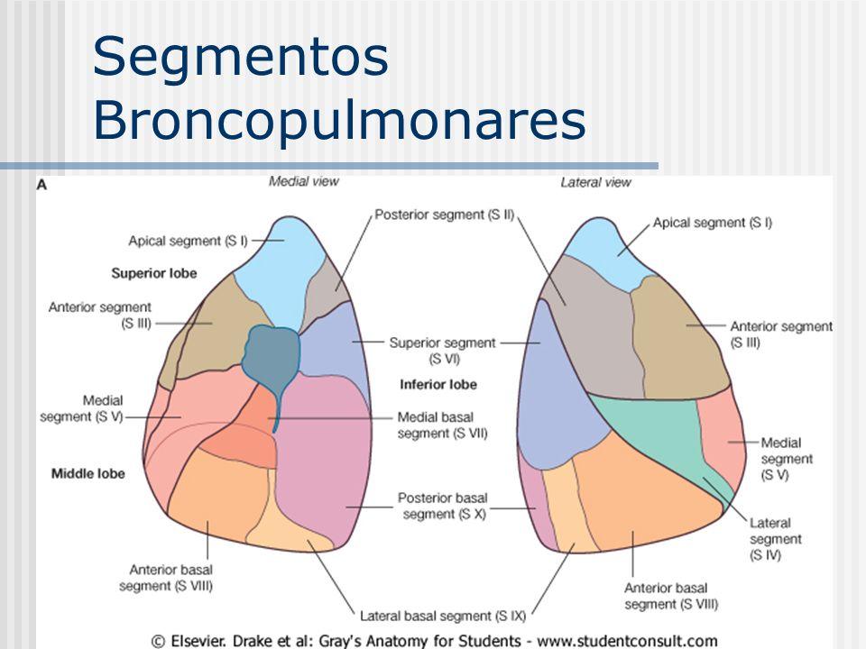 Segmentos Broncopulmonares