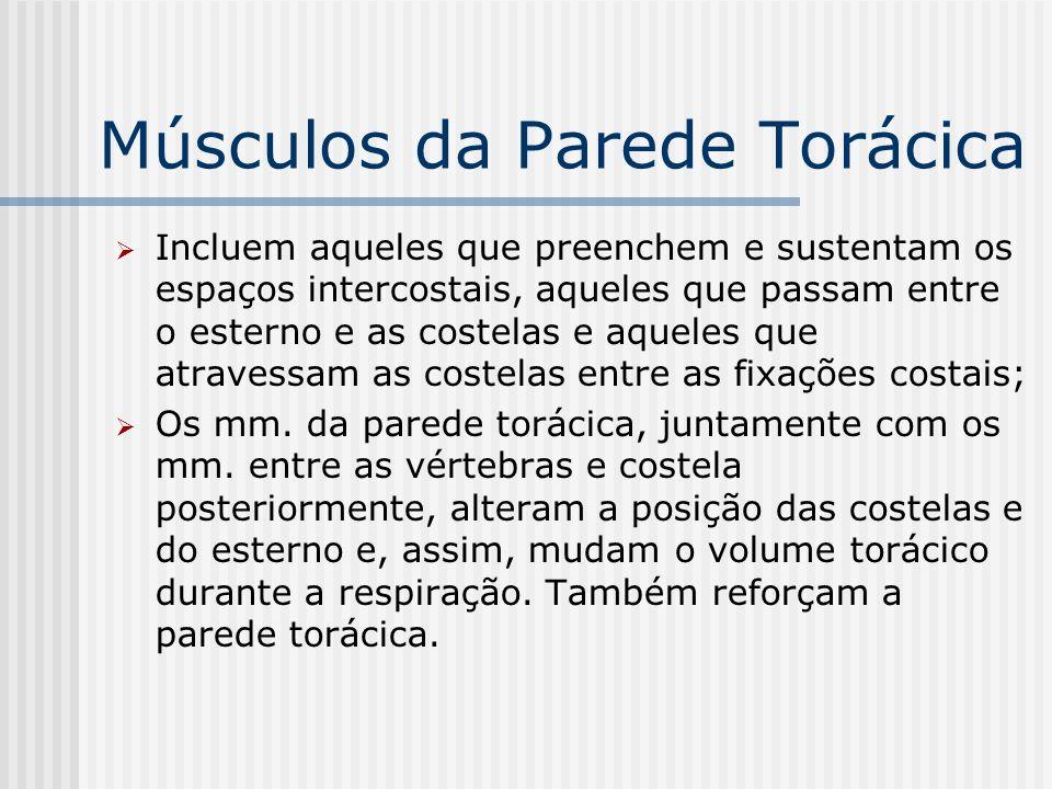 Músculos da Parede Torácica