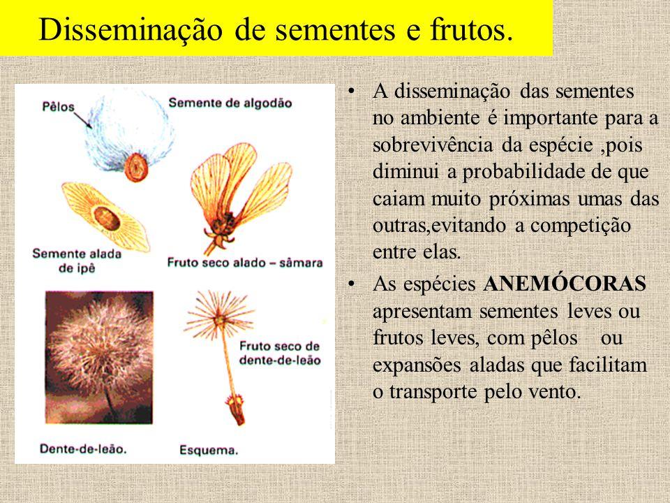 Disseminação de sementes e frutos.