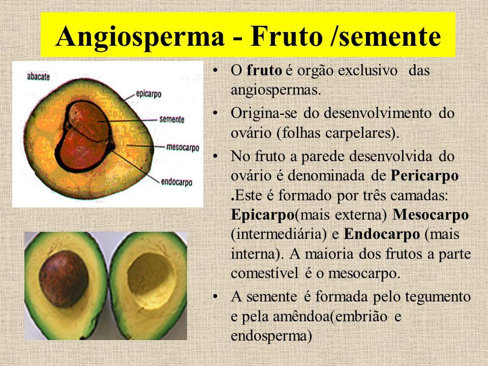 Angiosperma - Fruto /semente