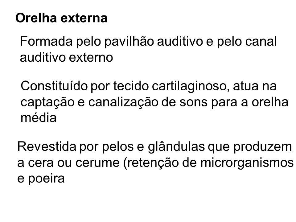 Orelha externaFormada pelo pavilhão auditivo e pelo canal. auditivo externo. Constituído por tecido cartilaginoso, atua na.