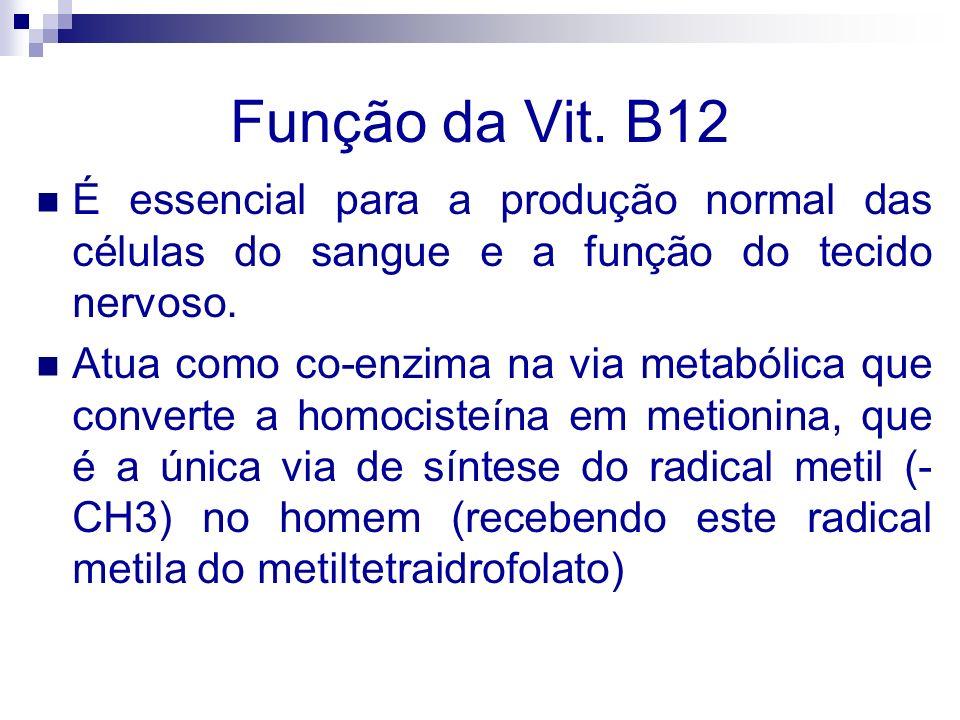 Função da Vit. B12É essencial para a produção normal das células do sangue e a função do tecido nervoso.