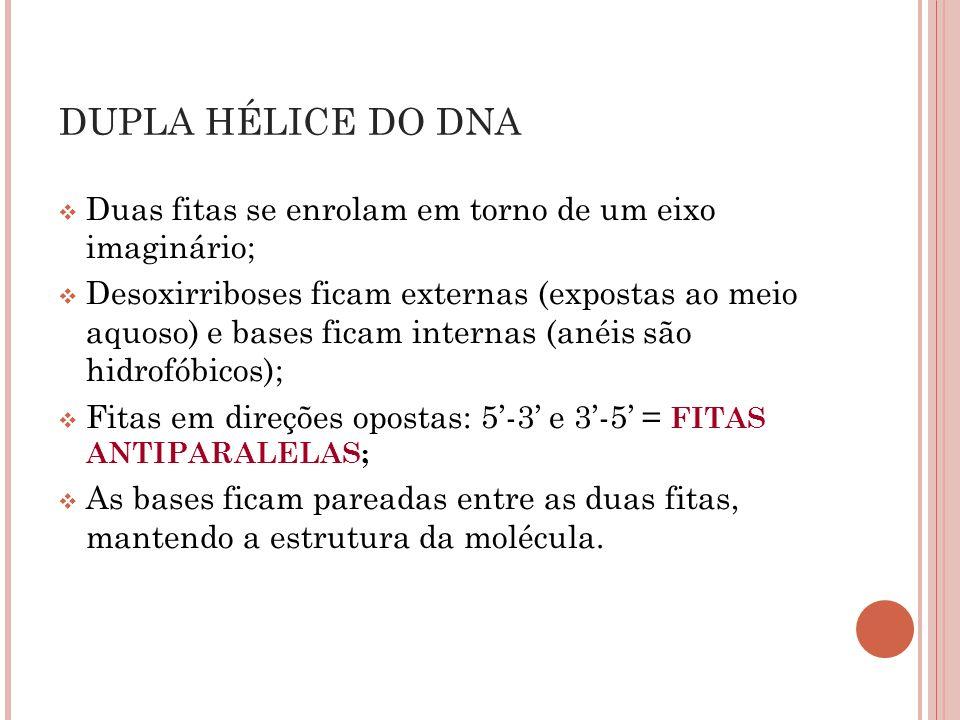 DUPLA HÉLICE DO DNA Duas fitas se enrolam em torno de um eixo imaginário;