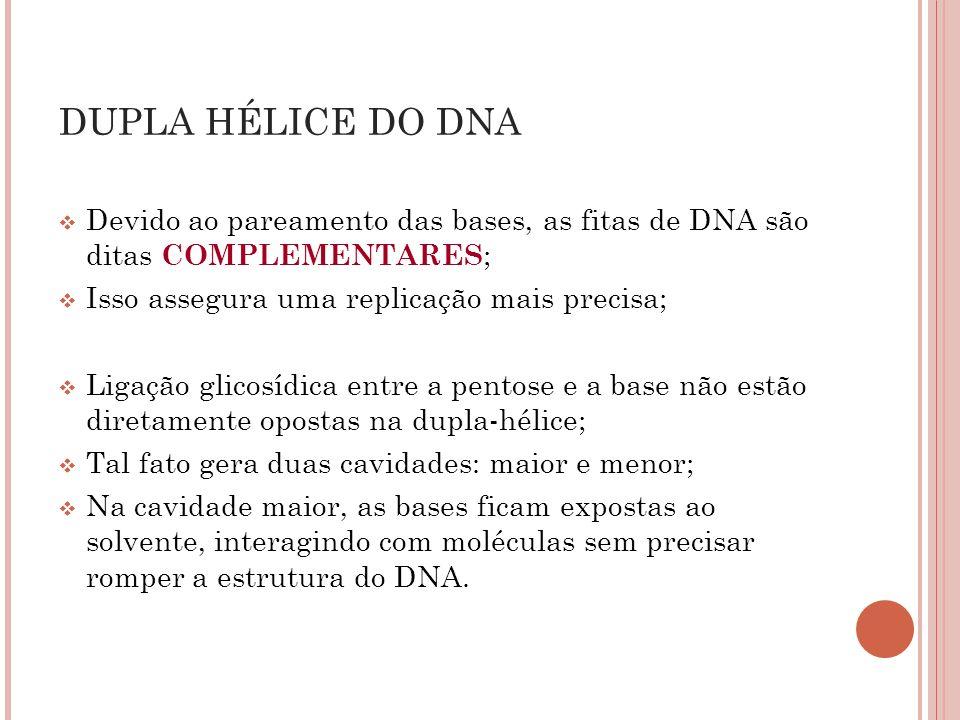 DUPLA HÉLICE DO DNA Devido ao pareamento das bases, as fitas de DNA são ditas COMPLEMENTARES; Isso assegura uma replicação mais precisa;
