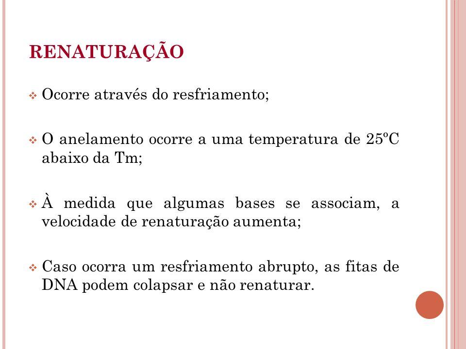RENATURAÇÃO Ocorre através do resfriamento;