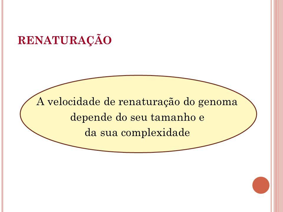 A velocidade de renaturação do genoma depende do seu tamanho e