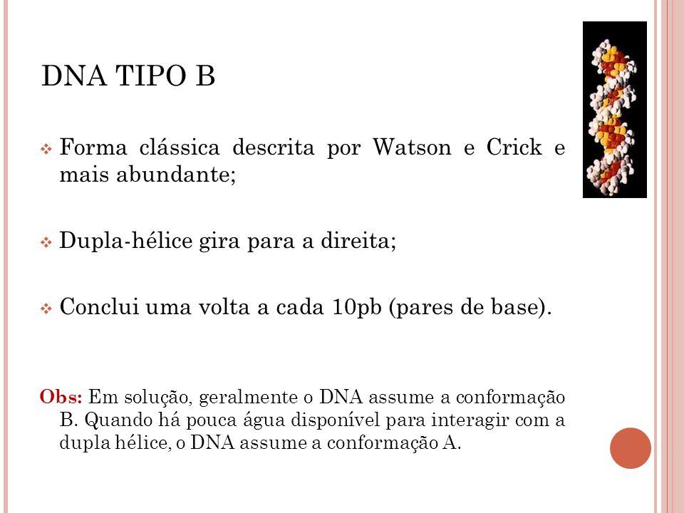 DNA TIPO B Forma clássica descrita por Watson e Crick e mais abundante; Dupla-hélice gira para a direita;
