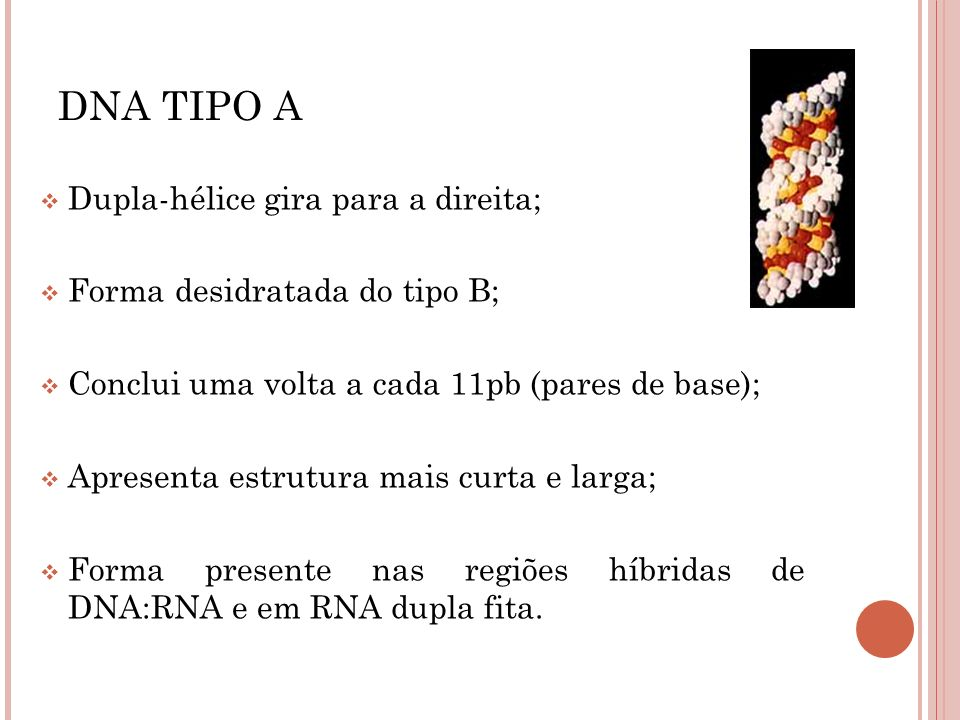 DNA TIPO A Dupla-hélice gira para a direita;