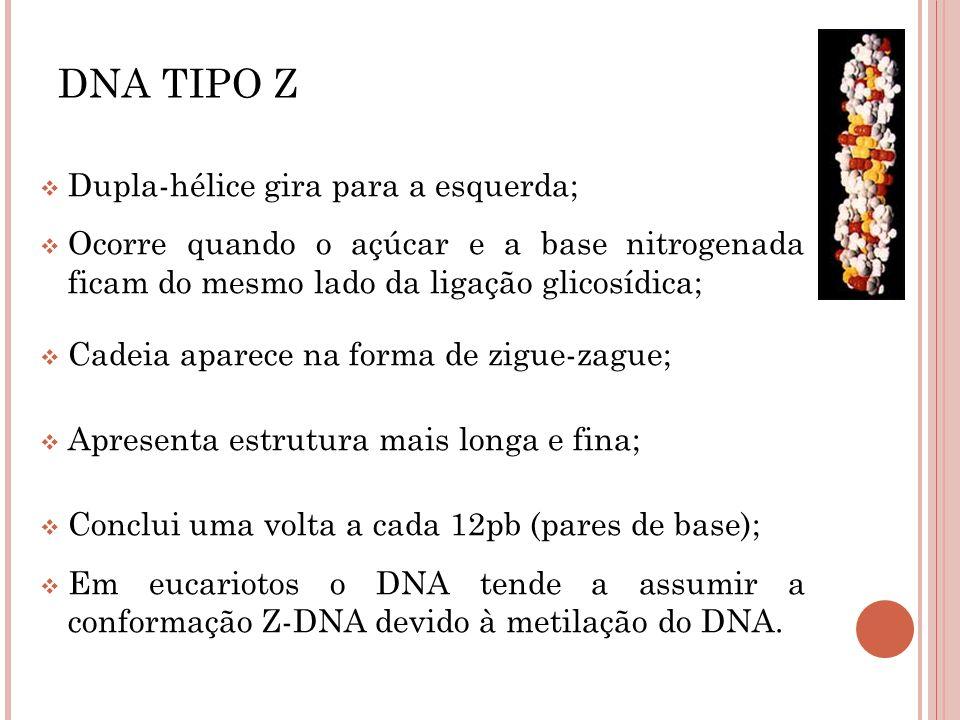 DNA TIPO Z Dupla-hélice gira para a esquerda;