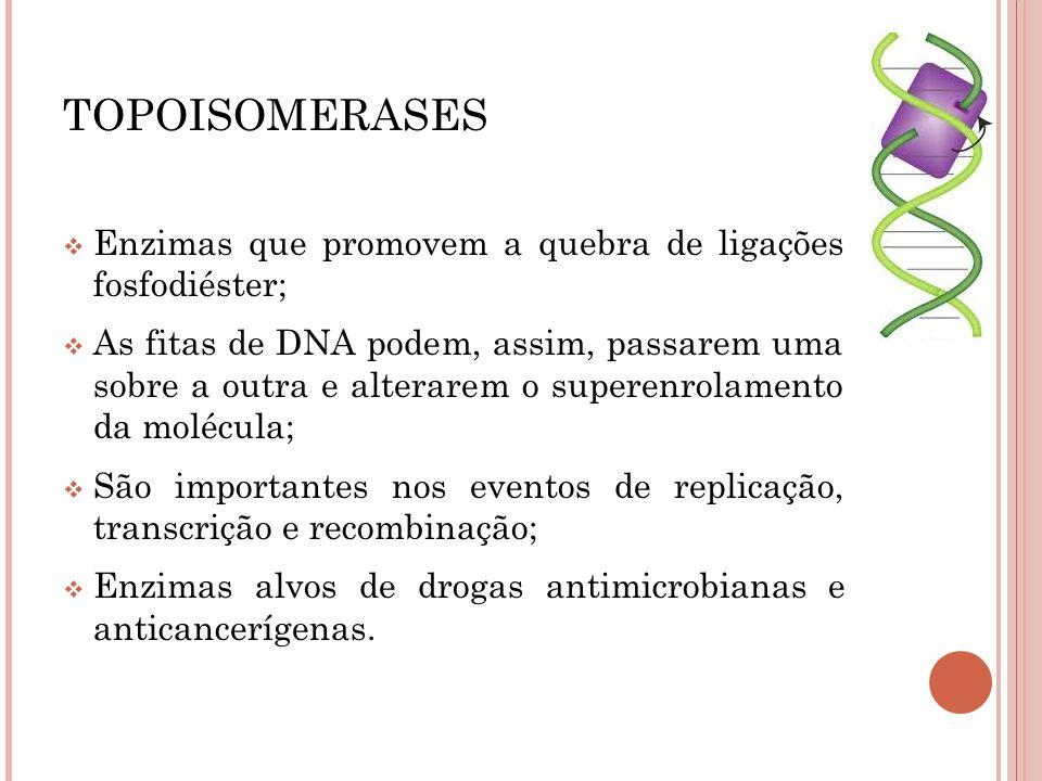 TOPOISOMERASES Enzimas que promovem a quebra de ligações fosfodiéster;