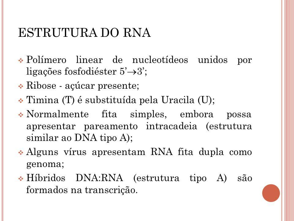 ESTRUTURA DO RNA Polímero linear de nucleotídeos unidos por ligações fosfodiéster 5'3'; Ribose - açúcar presente;