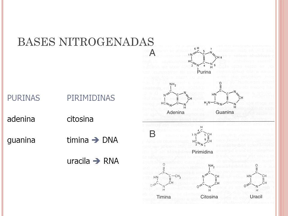 BASES NITROGENADAS PURINAS PIRIMIDINAS adenina citosina guanina