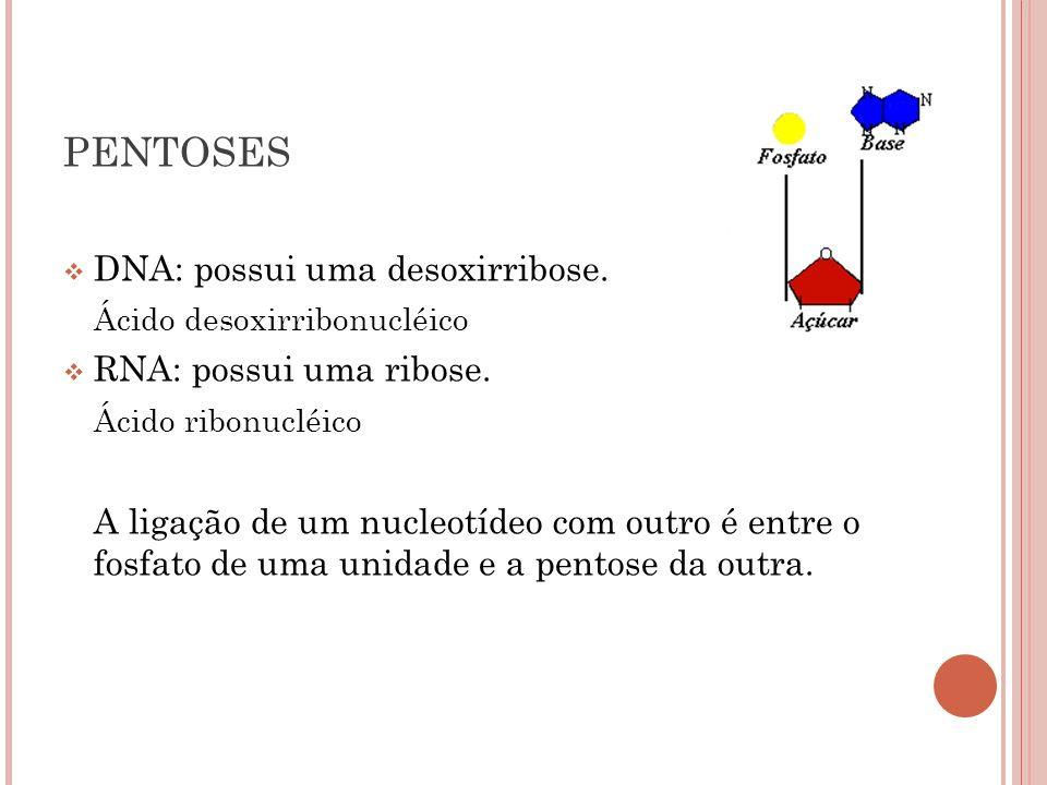 PENTOSES DNA: possui uma desoxirribose. Ácido desoxirribonucléico