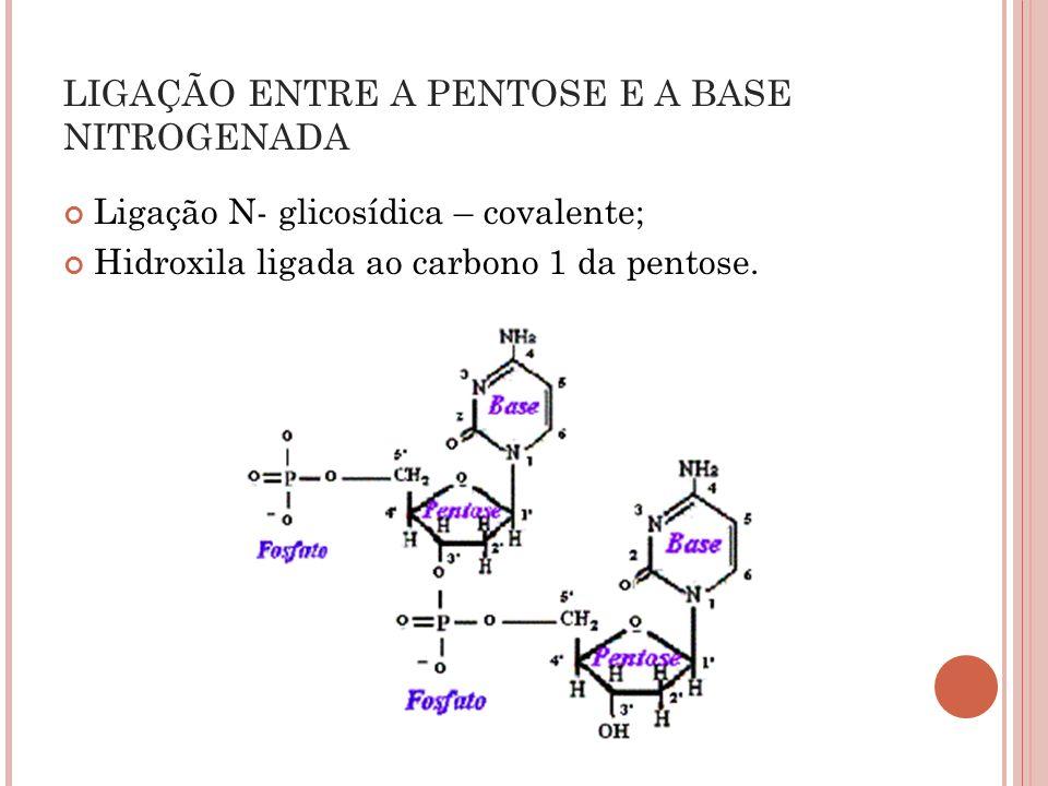 LIGAÇÃO ENTRE A PENTOSE E A BASE NITROGENADA
