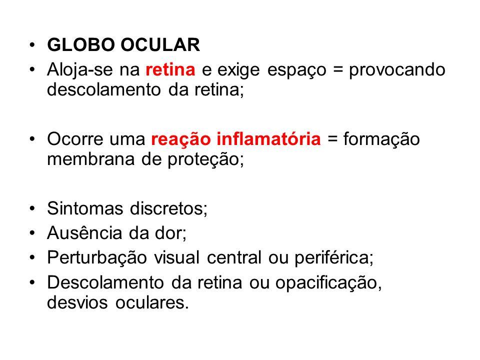GLOBO OCULAR Aloja-se na retina e exige espaço = provocando descolamento da retina; Ocorre uma reação inflamatória = formação membrana de proteção;